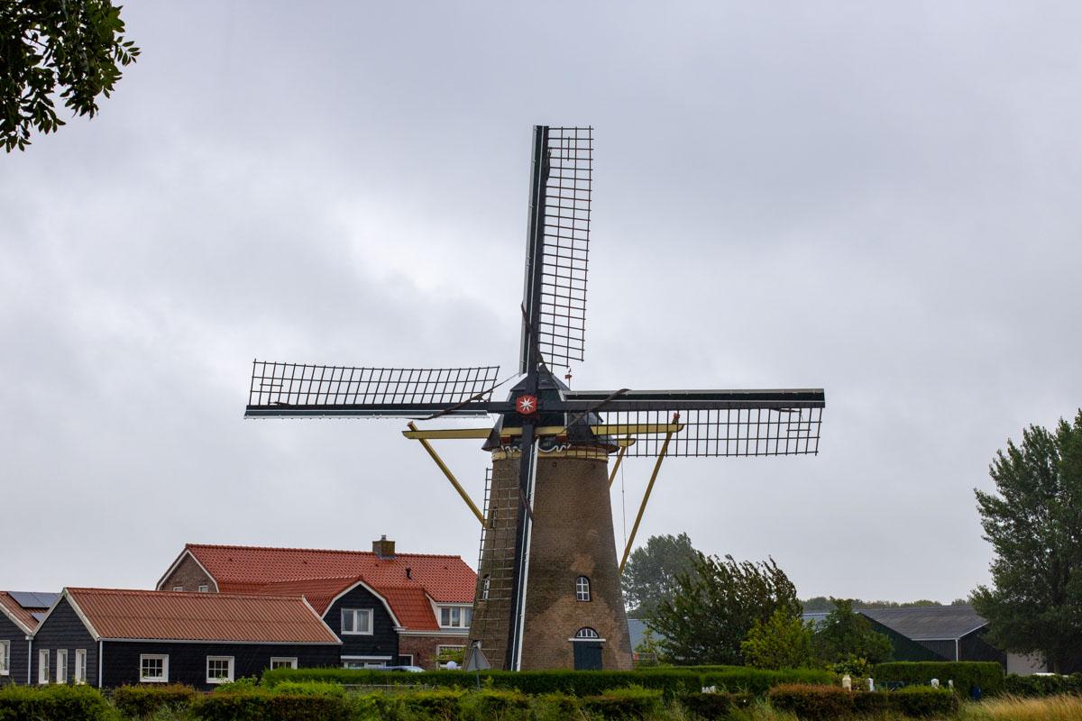 week 29 Maan Nieuwland