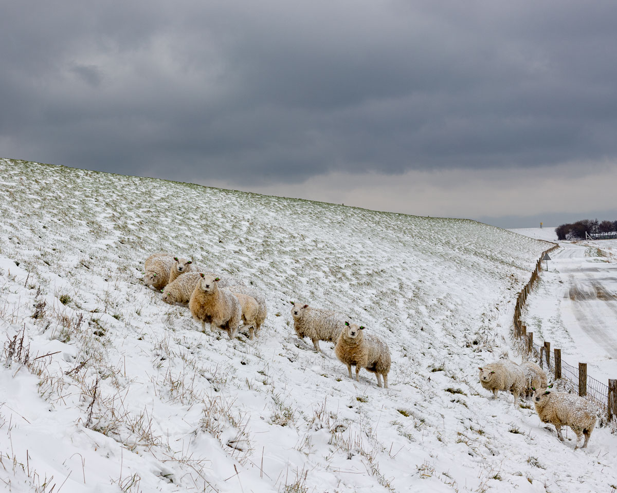 week_04_annevankruijssen_winter
