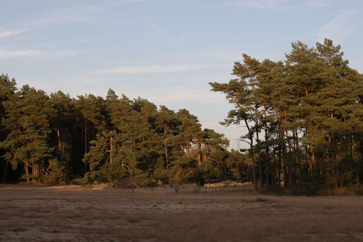 Week 31, Lizet van Oosterhout